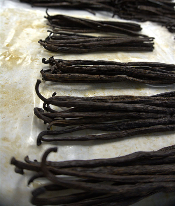 Vanilla beans out of the packaging