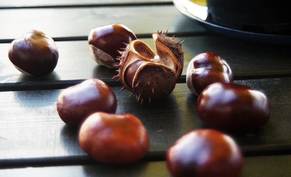 chestnuts on a park table